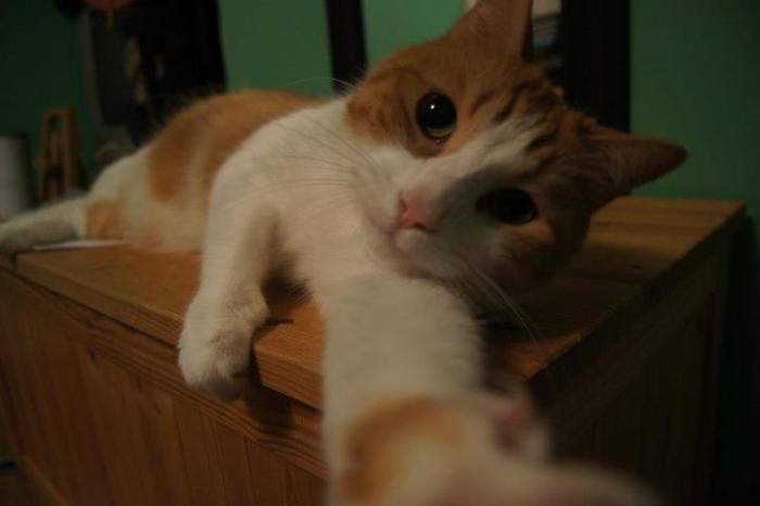 A cat taking a selfie